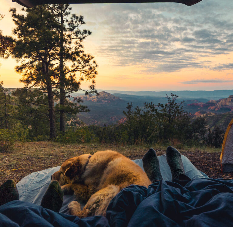 Dog sleeping next to feet of campers